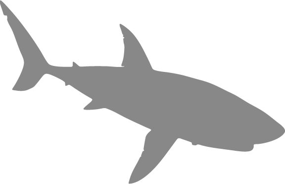 Shark Swimming