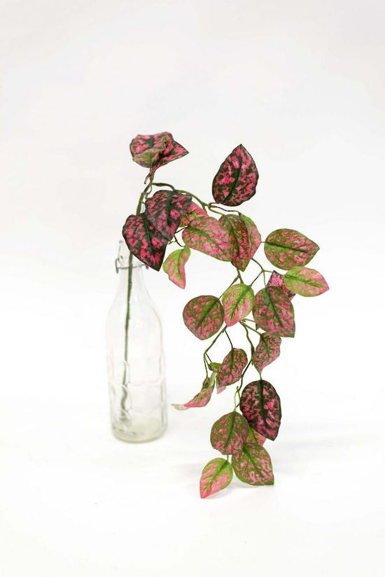 Coleus Bush Hanging