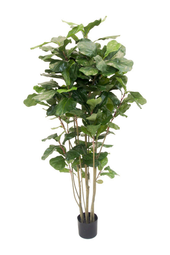 Potted Fiddle Leaf Tree 1.5m