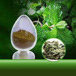 China herb extract Mint Leaf Moringa Leaf Extract with 10:1 menthol