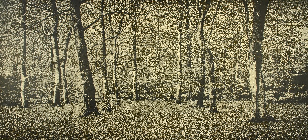 Buy 'The Beach Wood', an original mixed media artwork by Trevor Price. Image shows a monochrome print of a dense forest.