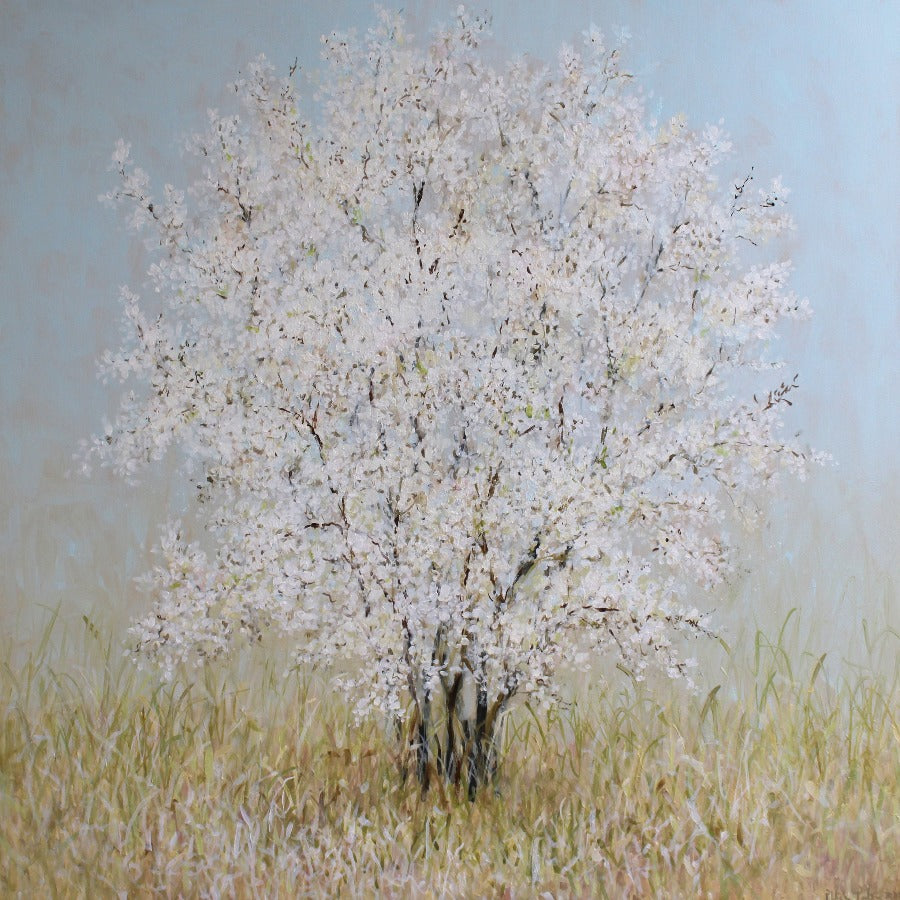 Buy 'White Blossom' a large scale landscape painting of a white flowering tree by Fletcher Prentice. Image shows a square painting of a large white blossom tree with dark limbs sat amongst yellowing grass and a powder blue sky.