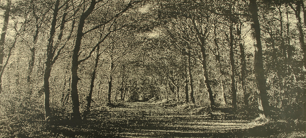 Buy 'Woodland Walk', an original mixed media artwork by Trevor Price. Image shows a monochrome print of a dense forest scene with a pathway leading into the centre of the print.