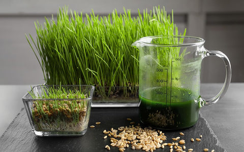Summer Cool Offs - Why and How to Grow Wheatgrass at Home