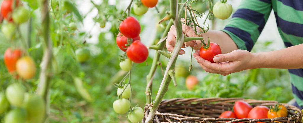 Kitchen Gardening: At Home with Health