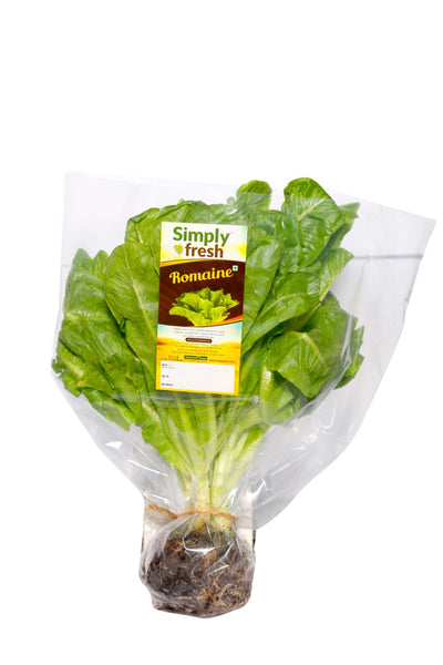 Romaine/Cos - Lettuce