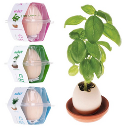 Lucky egg hatching pot plant