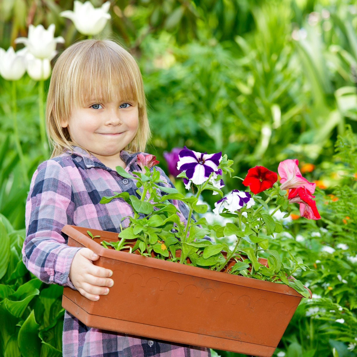 Growing vegetables - planting in containers