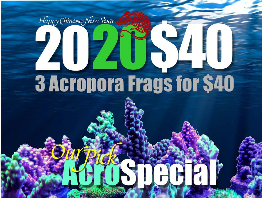 2020 Acropora 3 Pack Special for $40