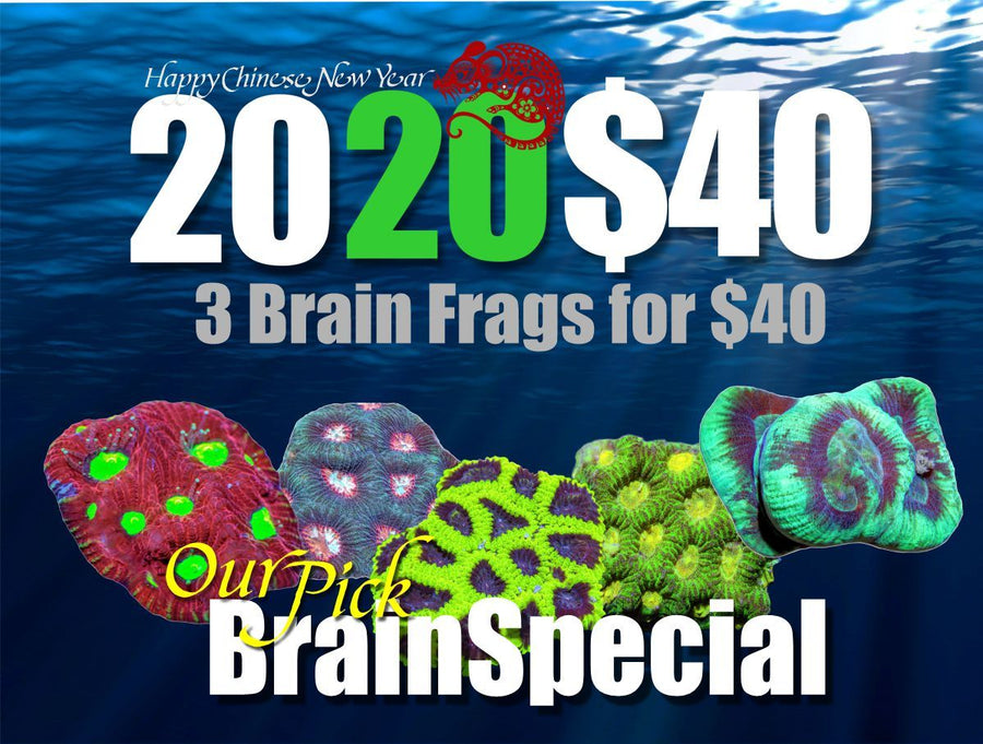 2020 Brain 3 Pack Special for $40