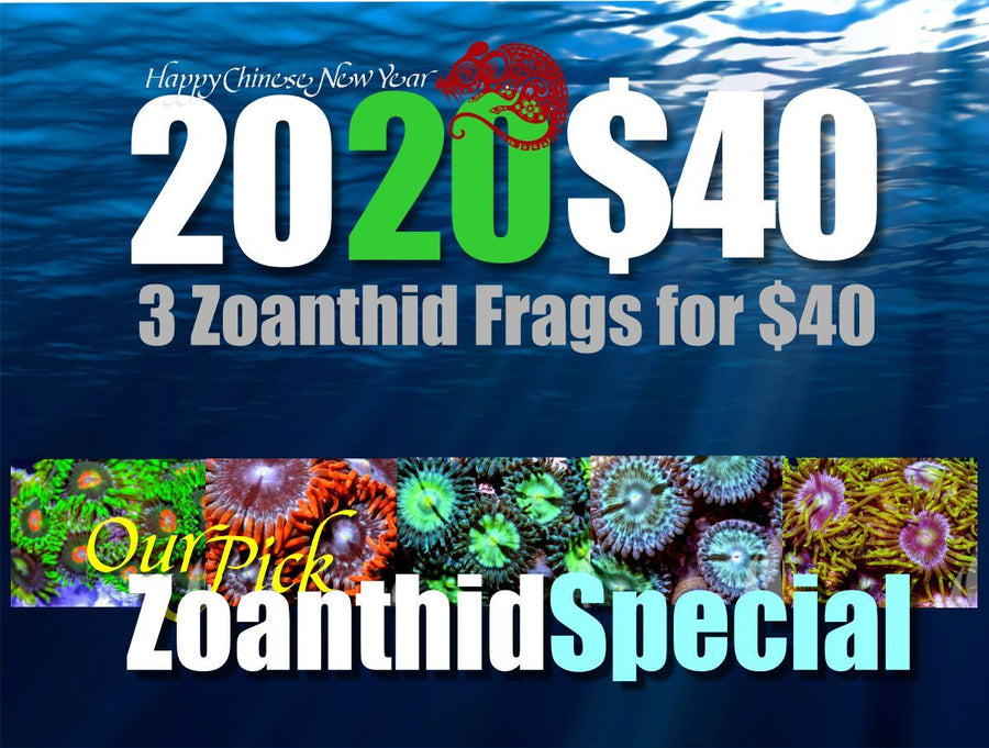 2020 Zoanthid 3 Pack Special for $40