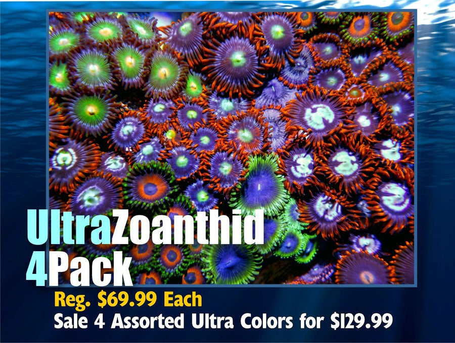Ultra Zoanthid Frag 4 pack