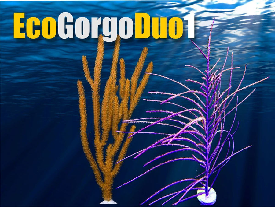 Eco-Gorgo Duo 1