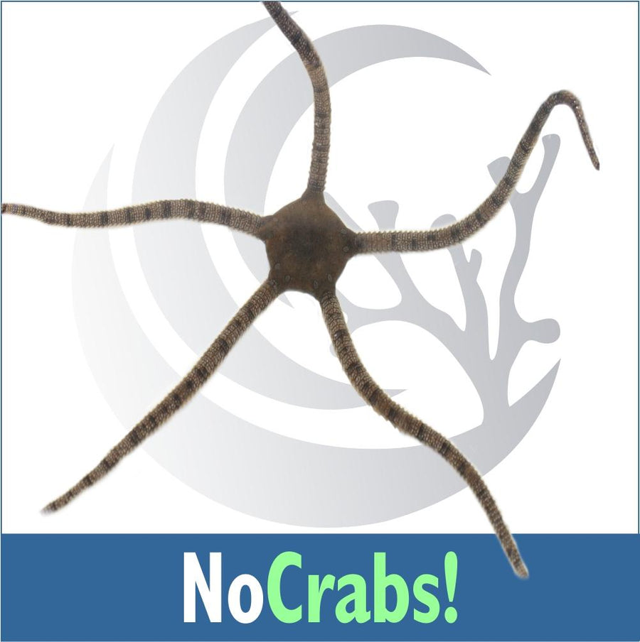 No Crabs Invert Kit