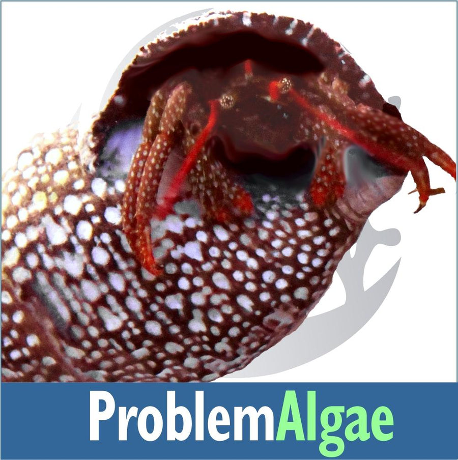 Problem Algae Invert Kit
