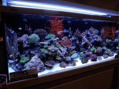 Aquarium with Real Reef Live Rock