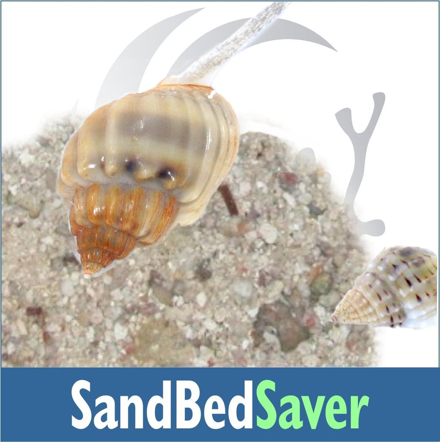Sand Bed Saver Invert Kit