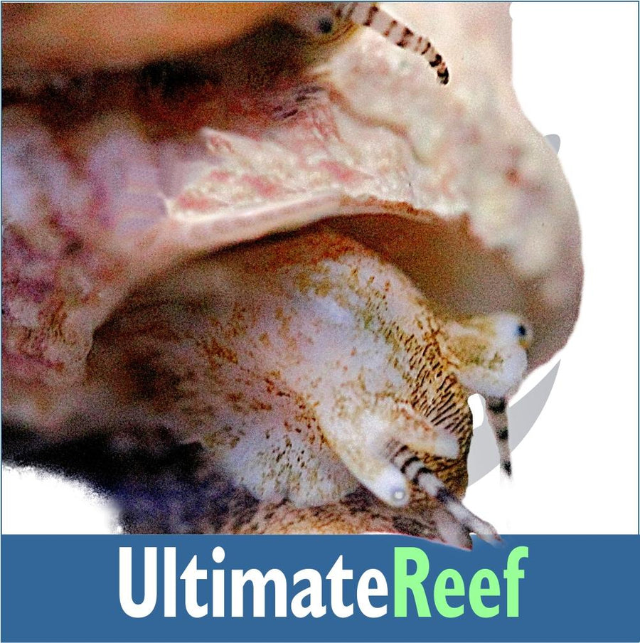 Ultimate Reef Diversity Kit