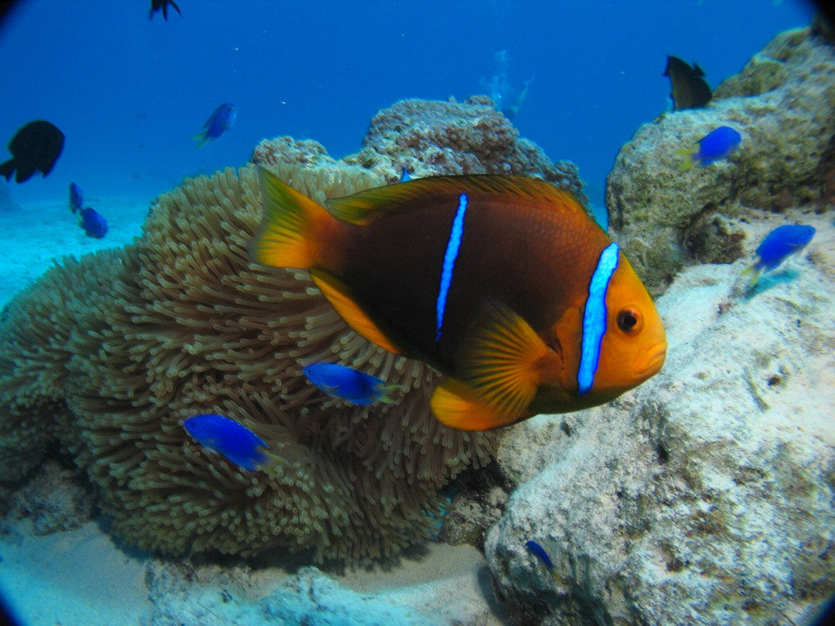Avoiding Common Pitfalls When Starting a Saltwater Aquarium