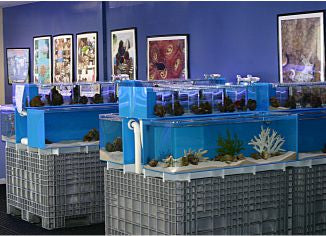 Retail FishTanks