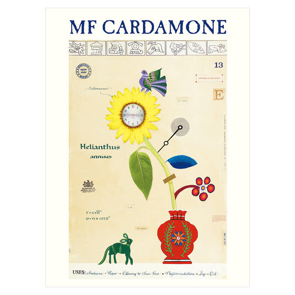 MF Cardamone Boxed Notecards