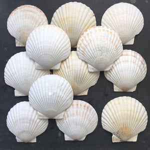 Vintage French Seashell Baking Shells - Set of 12 - Serving and Baking Dishes
