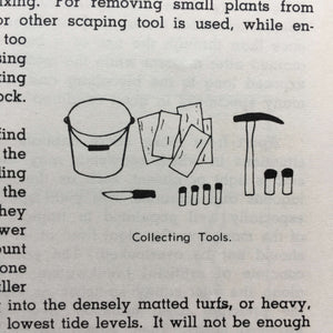 How  to Know the Seaweeds - E. Yale Dawson - Seaweed Identification Guide - 1963 Edition