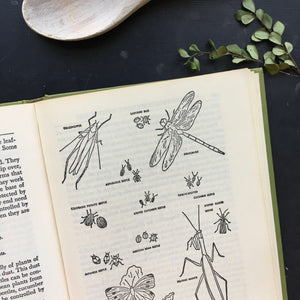 The Vegetable Encyclopedia and Gardener's Guide by Victor Tiedjens - 1973 Edition