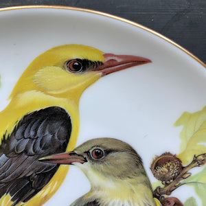 Vintage Oriole Bird Plate - World Wildlife Fun Ursula Band Decorative Plate Series - Circa 1986 Limited Edition