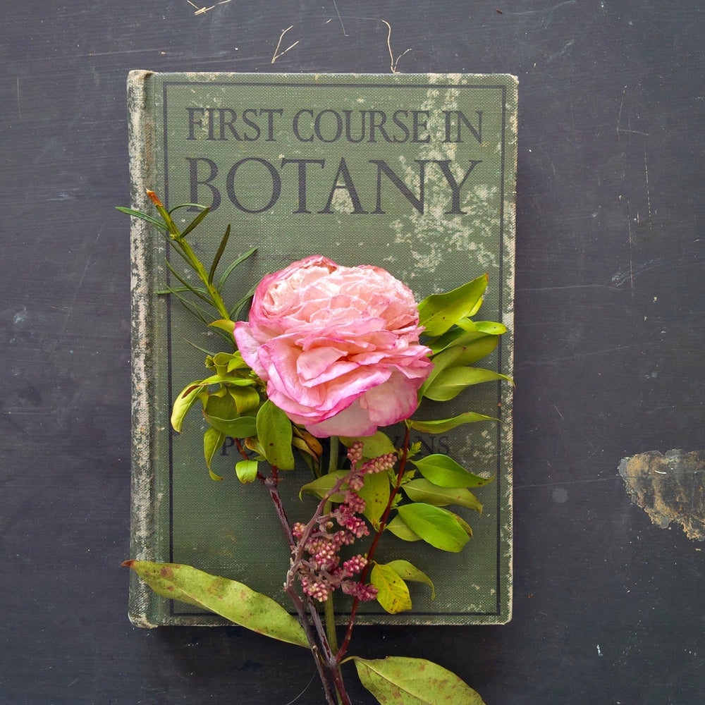 First Course in Botany - Raymond J. Pool & Arthur T. Evans - 1932 Edition