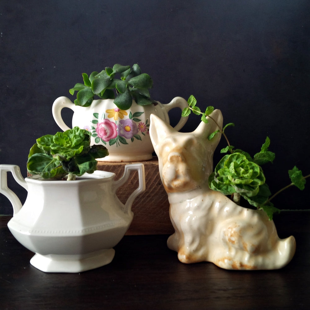 Scottie Dog Planter - Vintage Mid-Century Mini Garden Pot