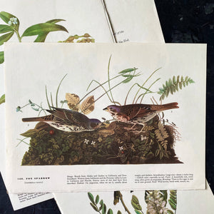 Vintage Fox Sparrow & Canada Jay Bird Bookplates - John James Audubon Birds of America - 1967 Edition
