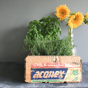Vintage Wooden Fruit Crate - Aconex Grapes from Chile circa 1970's