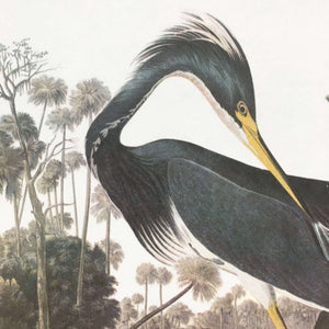 Vintage Louisiana Heron Bookplate from John James Audubon Birds of America - 1967 Edition