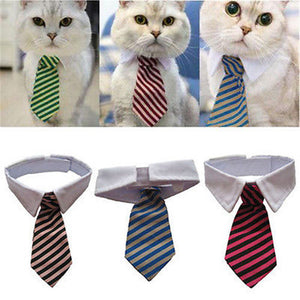 Adjustable White Collar Cat Neck Tie