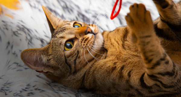 Help Your Cat Live a Happy, Healthy Life