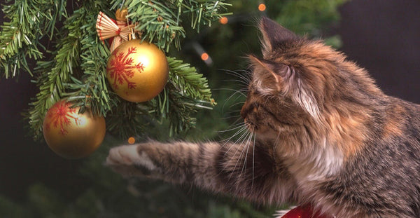 5 Ways to Help Animals this Season
