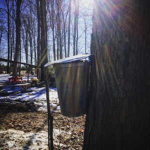 Secrets of the Sugarbush - Weekday Excursion