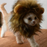 Funny Cat Costume for Halloween - Lion Mane