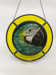 Green-winged Macaw Stained Glass Panel 11-1/4'' dia
