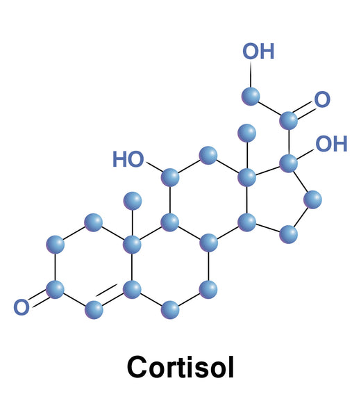 Cortisol: Good or Bad? How to Maintain a Healthy Balance