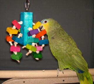 Chiefer's Chunks Medium Bird Toy