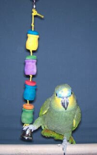 Charlie's Treasure Pots Medium Bird Toy