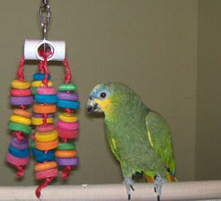 Calipso's Wheely Fun Medium Bird Toy