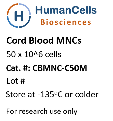 human cord blood monoculcear cells, CB MNCs