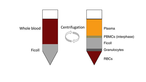 healthy peripheral blood mononuclear cells, PBMC, MNCs