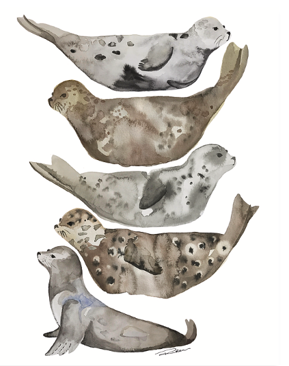 Seals of La Jolla Art Print