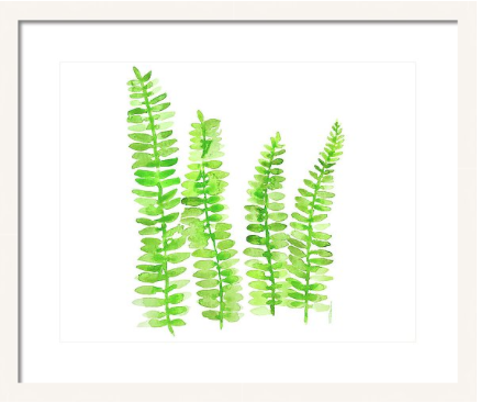 Fresh Ferns Print