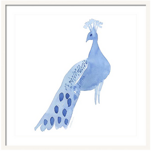 Demurely Peacock Animal Art Print