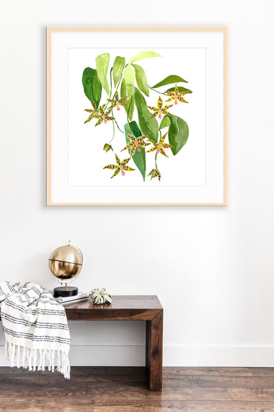 Le Orchidee Flower Print